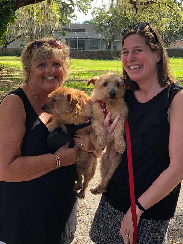 Norfolk Terrier Rescue Dogs