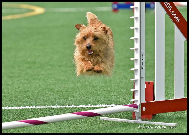 jump_dog