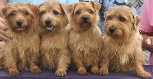 floridaagilitydogs