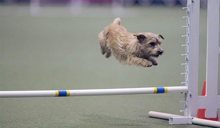 jumpdog2