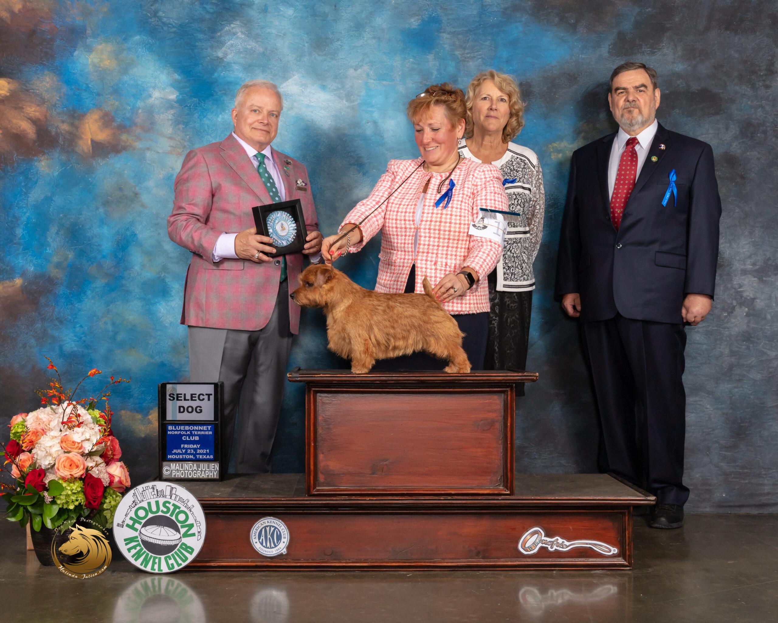 Norfolk_Terrier_#9_Fri_SD_Judge_Dennis_Mccoy-MMJ_0647-HOUSTON21-HR3-(ZF-10718-03024-2-001)